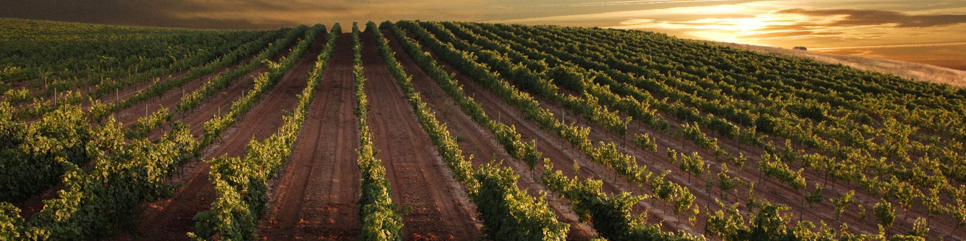 Arlanza Wine Route